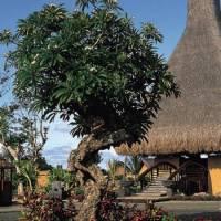 Горящие туры в отель The Oberoi Mauritius 5*, Маврикий,